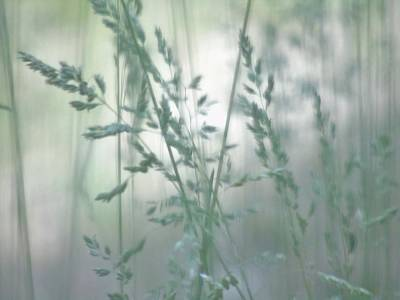 Photograph - Silvery Green Grasses by Barbara St Jean