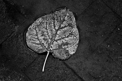 Photograph - Silvery Leaf I by Dave Gordon