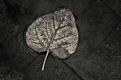Photograph - Silvery Leaf I Toned by David Gordon