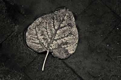 Photograph - Silvery Leaf I Toned by David Gordon