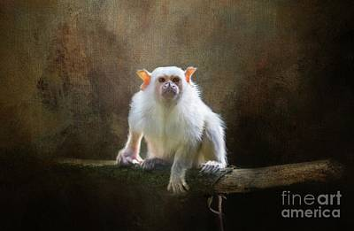 Photograph - Silvery Marmoset by Eva Lechner