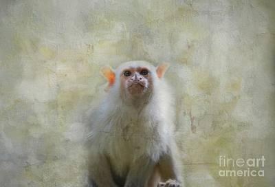 Photograph - Silvery Marmoset Portrait by Eva Lechner