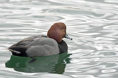 Photograph - Silvery Swim by Tam Ryan