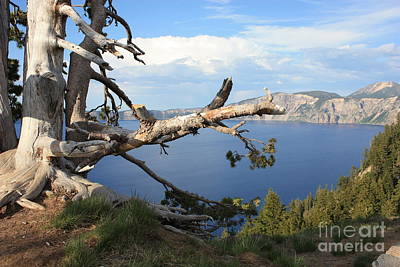 Trees And Lake Photograph - Silvery Tree Over Crater Lake by Carol Groenen