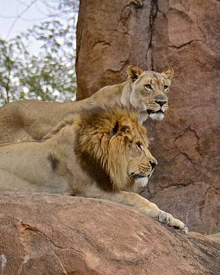 Photograph - Simba And Nala by Carol Bradley