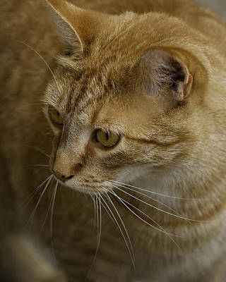 Photograph - Simba by Michael Dougherty