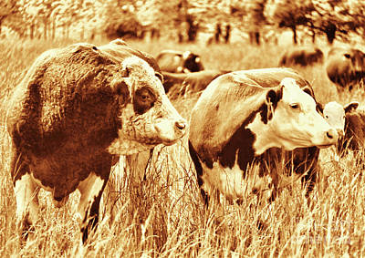 Photograph - Simmental Bull 3 by Larry Campbell
