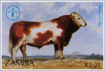 Steer Painting - Simmental Bull by Lanjee Chee