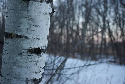 Photograph - Simple Aspen No.2 by Desmond Raymond