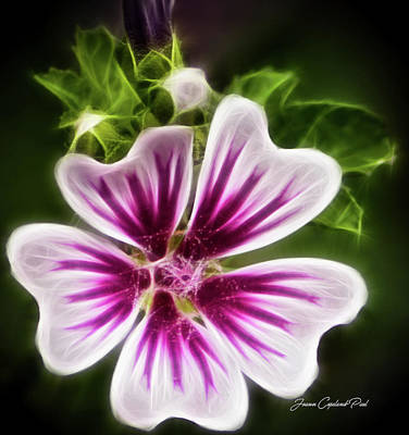 Photograph - Simple Beauty by Joann Copeland-Paul