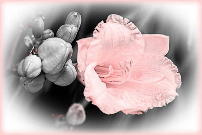 Digital Art - Simple Beauty - Lily - Floral by Barry Jones