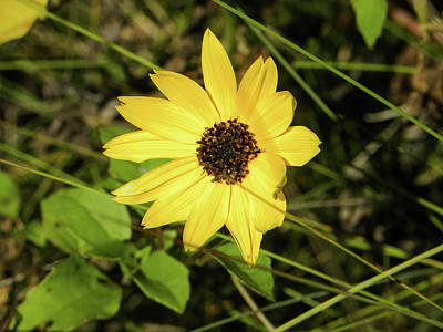 Sunshine Photograph - Simple Beauty by Ric Schafer