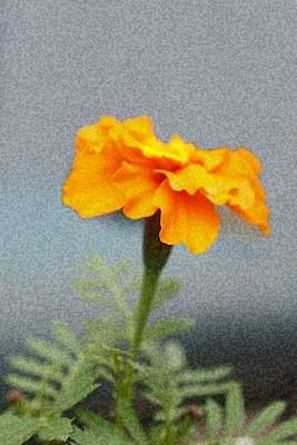 Photograph - Simple Bright Flower by Ellen Barron O'Reilly