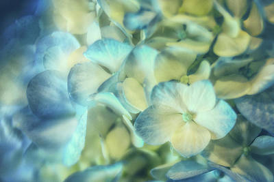 Photograph - Simple Elegance by Marnie Patchett