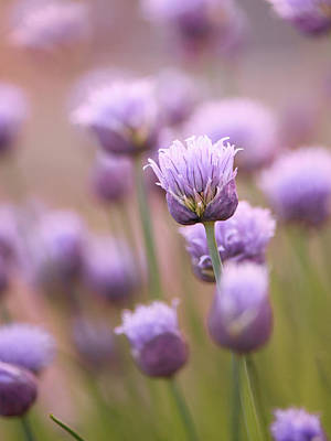 Photograph - Simple Flowers by Jennifer Grossnickle