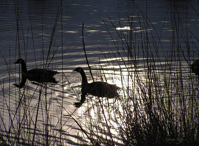 Photograph - Simple Geese by George Tuffy