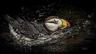 Photograph - Simple Puffin by Bill Posner