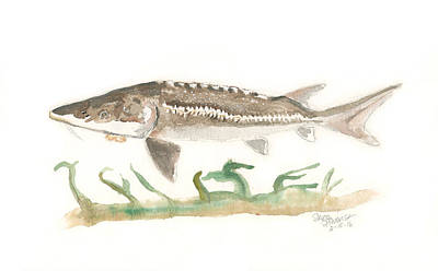 Painting - Simple Sturgeon by Sara Stevenson