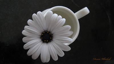 Photograph - Simple White Daisy by Doreen Whitelock
