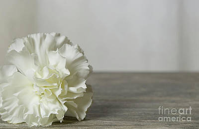Photograph - Simple White Flower by Liz Masoner
