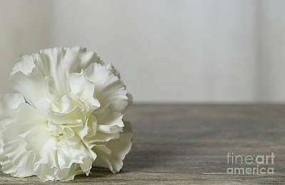 Photograph - Simple White Flower by Liz Masoner