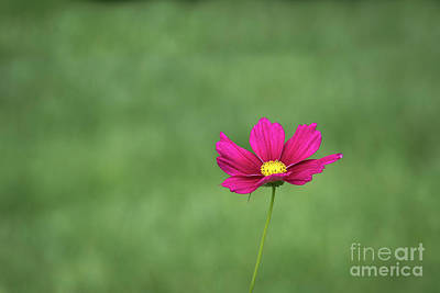 Photograph - Simplicity by Andrea Silies