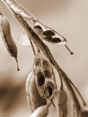 Photograph - Simplicity In Sepia by Lauren Radke