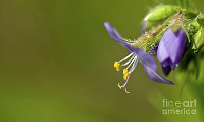 Photograph - Simplicity by Liz Alderdice