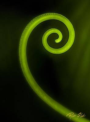 Photograph - Simplicity Nature's Fibonacci by Rikk Flohr