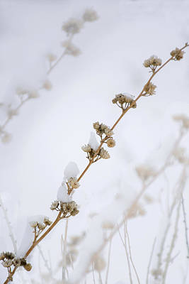 Photograph - Simplicity Of Winter by Susan Warren