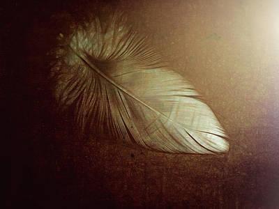 Photograph - Simplify by Ann Powell