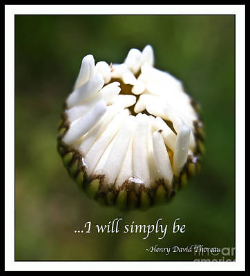 Photograph - Simply Be by Kerri Farley