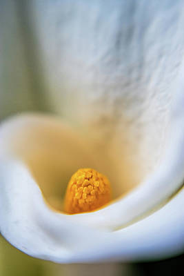 Vagina Art Photograph - Simply Beautiful by Scott Campbell