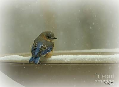 Photograph - Simply Blue by Barbara S Nickerson