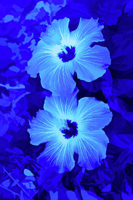 Photograph - Simply Blue Hibiscus Flowers Vertical by Aimee L Maher Photography and Art Visit ALMGallerydotcom