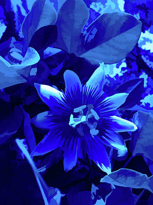 Photograph - Simply Blue Passion Flower 1 by Aimee L Maher Photography and Art Visit ALMGallerydotcom