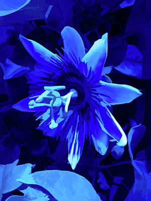 Photograph - Simply Blue Passion Flower 5 by Aimee L Maher Photography and Art Visit ALMGallerydotcom