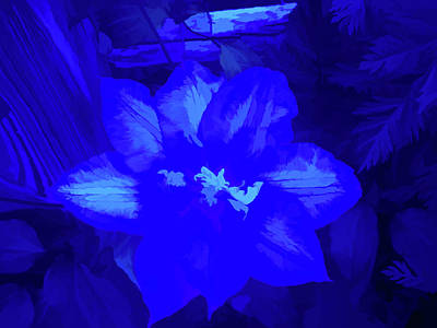 Photograph - Simply Blue Passion Vine by Aimee L Maher Photography and Art Visit ALMGallerydotcom