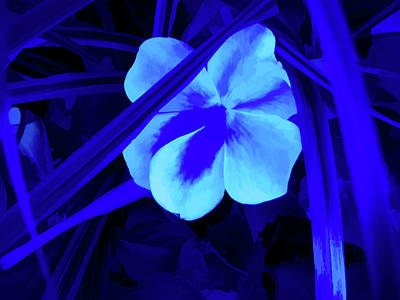 Photograph - Simply Blue Peaceful by Aimee L Maher Photography and Art Visit ALMGallerydotcom