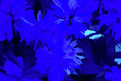 Photograph - Simply Blue Petals by Aimee L Maher Photography and Art Visit ALMGallerydotcom