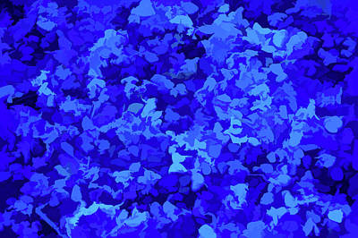 Photograph - Simply Blue Petals On Stones by Aimee L Maher Photography and Art Visit ALMGallerydotcom