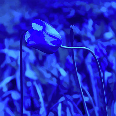 Photograph - Simply Blue Pink Tulip by Aimee L Maher Photography and Art Visit ALMGallerydotcom