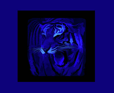 Photograph - Simply Blue Portrait Of A Tiger by Aimee L Maher Photography and Art Visit ALMGallerydotcom