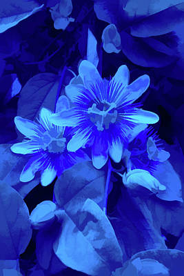 Photograph - Simply Blue Purple Passion Vine 2 by Aimee L Maher ALM GALLERY