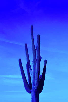 Photograph - Simply Blue Saguaro Cactus by Aimee L Maher Photography and Art Visit ALMGallerydotcom