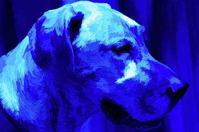 Photograph - Simply Blue Sammy by Aimee L Maher Photography and Art Visit ALMGallerydotcom