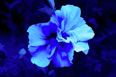 Photograph - Simply Blue Summer Blossom by Aimee L Maher Photography and Art Visit ALMGallerydotcom
