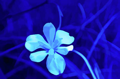 Photograph - Simply Blue White Petals by Aimee L Maher Photography and Art Visit ALMGallerydotcom