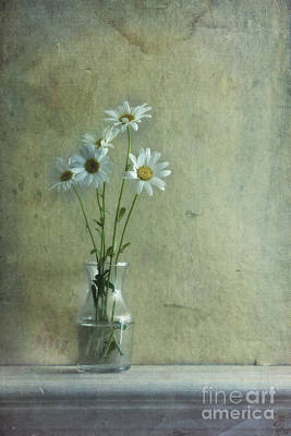 Glass Wall Photograph - Simply Daisies by Priska Wettstein