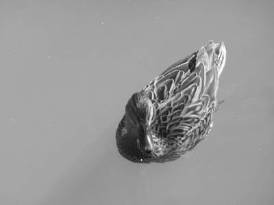 Photograph - Simply Duck by Esther Newman-Cohen